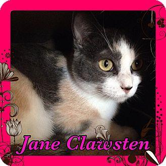 Calico Cat for adoption in Pahrump, Nevada - Jane Clawsten