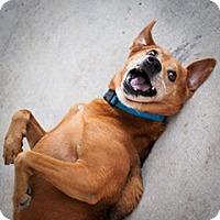 Adopt A Pet :: Tango - Baton Rouge, LA