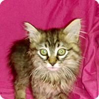 Adopt A Pet :: WYNONA - pasadena, CA