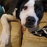 Adopt A Pet :: Alexa - Suwanee, GA