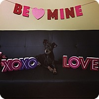 Adopt A Pet :: Reina - Melbourne, FL