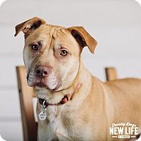 Adopt A Pet :: Richie - Portland, OR