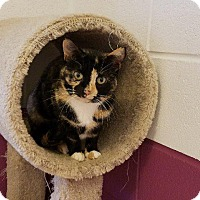 Adopt A Pet :: Julie - Crossville, TN