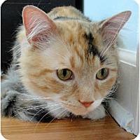 Adopt A Pet :: RuPaul - Chicago, IL