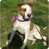 Adopt A Pet :: Eclipse.Stunning - Sacramento, CA