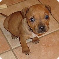 Adopt A Pet :: Dana - Chattanooga, TN