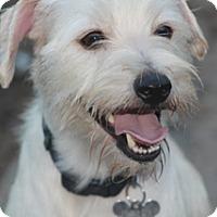Adopt A Pet :: Delaney - Norwalk, CT