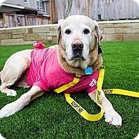 Adopt A Pet :: Gusto - Austin, TX
