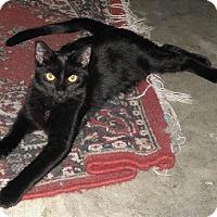 Adopt A Pet :: Spookie - Mobile, AL