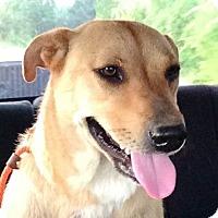 Adopt A Pet :: Resa - West Hartford, CT