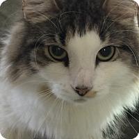 Adopt A Pet :: Cowlan - Winchendon, MA