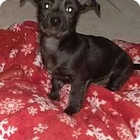 Adopt A Pet :: Echo - Ogden, UT