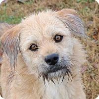 Adopt A Pet :: Tyler - Harrisonburg, VA