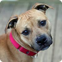 Adopt A Pet :: O'Malley - Alpharetta, GA
