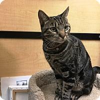 Adopt A Pet :: Sarah - Riverside, CA