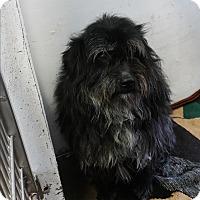 Adopt A Pet :: Buddie - Chippewa Falls, WI