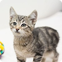 Adopt A Pet :: Lancelot II - Fountain Hills, AZ