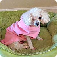 Adopt A Pet :: Hope - Essex Junction, VT