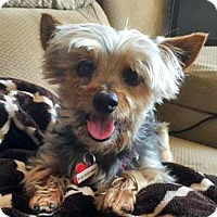 Adopt A Pet :: Danica - San Diego, CA