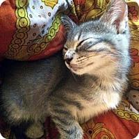 Adopt A Pet :: Eltrio - Austin, TX