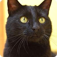 Adopt A Pet :: Friar Tuck - St. Paul, MN