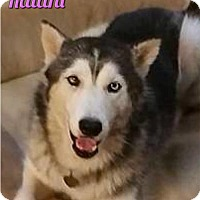 Adopt A Pet :: Kalani--Coming soon! - Carrollton, TX