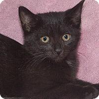 Adopt A Pet :: Mystique - Elmwood Park, NJ