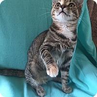 Adopt A Pet :: Arianna - Bloomsburg, PA