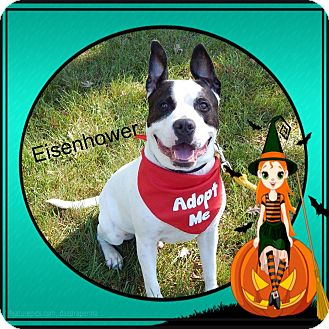 American Pit Bull Terrier Mix Dog for adoption in Buffalo, Indiana - Eisenhower