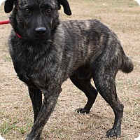 Adopt A Pet :: Leo - PENDING - East Dover, VT