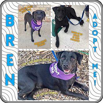 Labrador Retriever Mix Dog for adoption in Allen, Texas - Bren