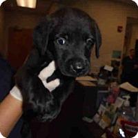 Adopt A Pet :: DONKEY - Lacombe, LA