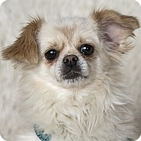 Adopt A Pet :: Bernie - McKenna, WA