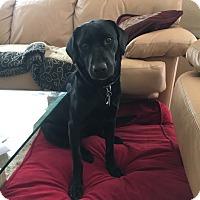 Adopt A Pet :: Lizzy - Phoenix, AZ