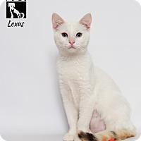 Adopt A Pet :: Lexus - Tomball, TX