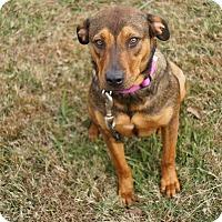 Adopt A Pet :: Maggie **BEYOND URGENT** - Columbia, TN