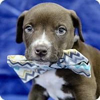 Adopt A Pet :: Danny - Picayune, MS