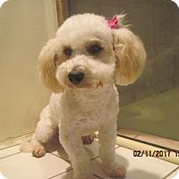 Adopt A Pet :: PETULA - La Mesa, CA