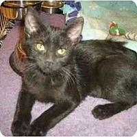 Adopt A Pet :: Puzzle - Scottsdale, AZ