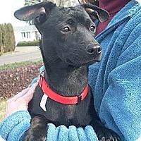 Adopt A Pet :: TEENY - Portland, OR