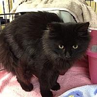 Adopt A Pet :: Bethany - Byron Center, MI