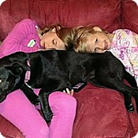 Adopt A Pet :: Aleesa - East Sparta, OH