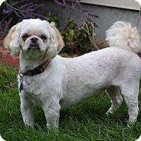Adopt A Pet :: Ada - Greeley, CO