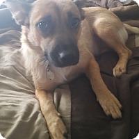 Adopt A Pet :: Baby - Marietta, GA