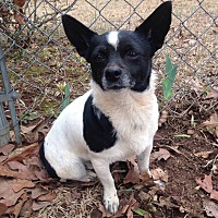 Adopt A Pet :: Gypsy - McDonough, GA