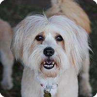 Adopt A Pet :: JENNA - Los Angeles, CA