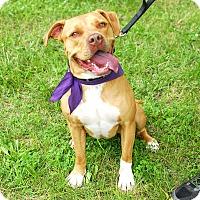 Adopt A Pet :: Rylie (fka Katt/Minnie) - Detroit, MI