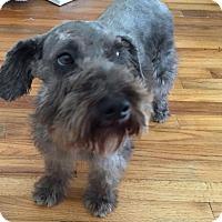 Adopt A Pet :: Ella - Redondo Beach, CA