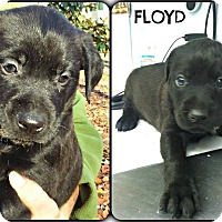 Adopt A Pet :: Floyd - Kimberton, PA