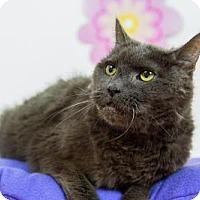 Adopt A Pet :: Omar - Wayne, PA